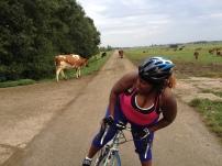 heerlijk al die koeien en boederijen